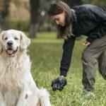O seu cão, a sua responsabilidade